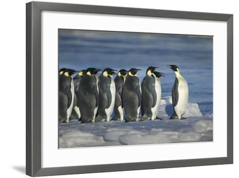 Emperor Penguins-DLILLC-Framed Art Print
