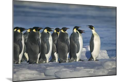 Emperor Penguins-DLILLC-Mounted Photographic Print