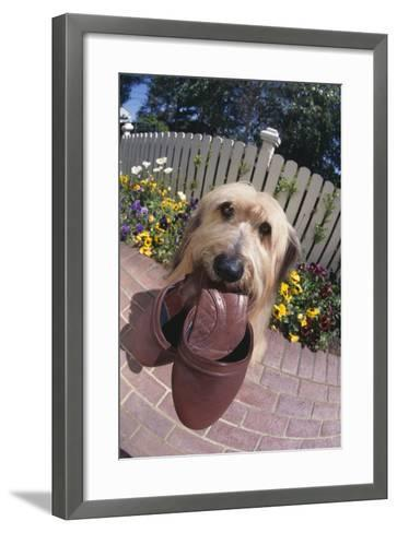 Dog with Slippers in Mouth-DLILLC-Framed Art Print