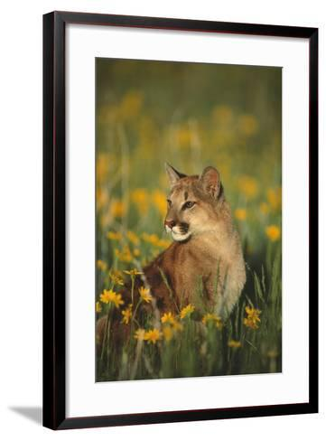 Mountain Lion Sitting in Wildflowers-DLILLC-Framed Art Print