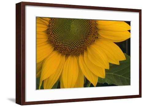 Sunflower-DLILLC-Framed Art Print