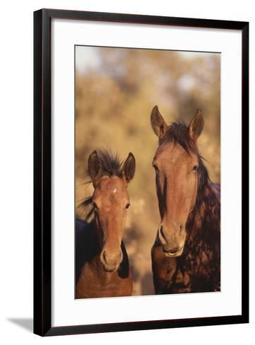 Wild Horse and Colt-DLILLC-Framed Art Print