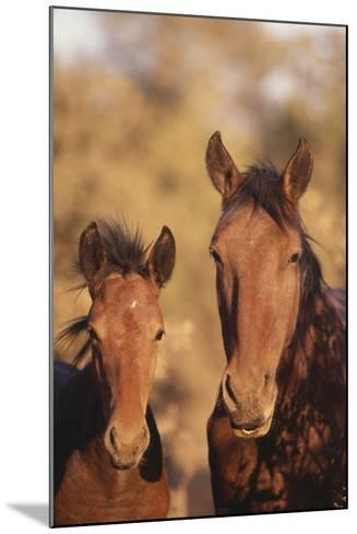 Wild Horse and Colt-DLILLC-Mounted Photographic Print