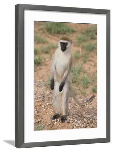 Vervet Monkey-DLILLC-Framed Art Print