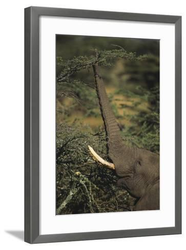 Elephant Reaching for Food-DLILLC-Framed Art Print