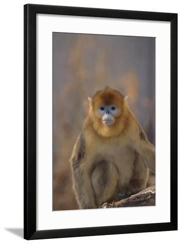 Blue Monkey-DLILLC-Framed Art Print