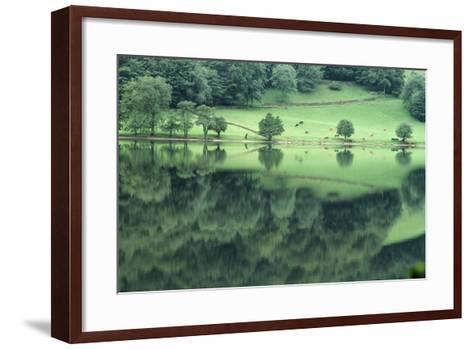 Cattle Grazing in Lake District-DLILLC-Framed Art Print