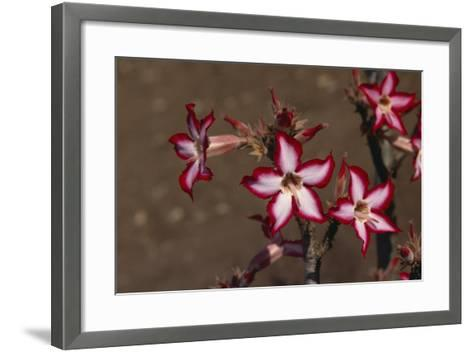 Impala Lily-DLILLC-Framed Art Print