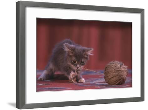 Kitten Playing with Ball of String-DLILLC-Framed Art Print
