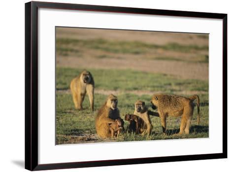 Baboon Family-DLILLC-Framed Art Print