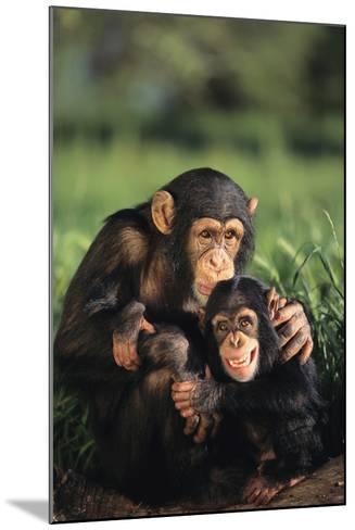 Happy Chimpanzee Family-DLILLC-Mounted Photographic Print