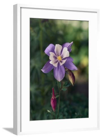 Columbine-DLILLC-Framed Art Print