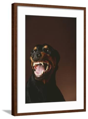 Snarling Doberman Pinscher-DLILLC-Framed Art Print