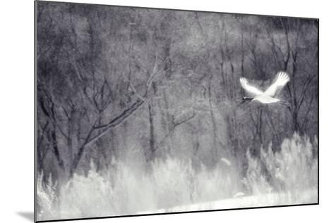 Red-Crowned Crane in Flight-DLILLC-Mounted Photographic Print