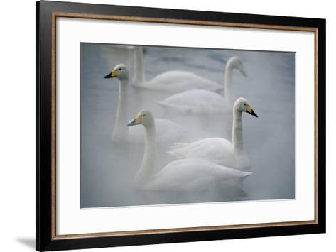 Whooper Swans on Lake-DLILLC-Framed Art Print