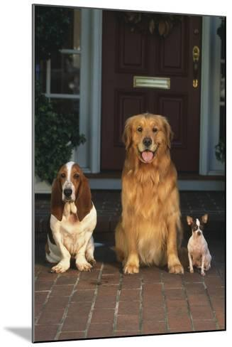 Three Dogs on Porch-DLILLC-Mounted Photographic Print