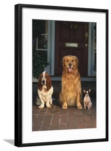 Three Dogs on Porch-DLILLC-Framed Art Print
