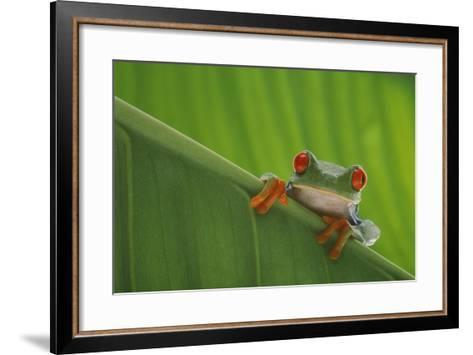Red-Eyed Tree Frog-DLILLC-Framed Art Print