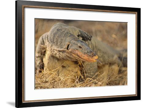 Monitor Lizard-DLILLC-Framed Art Print
