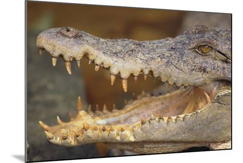 Crocodile-DLILLC-Mounted Photographic Print