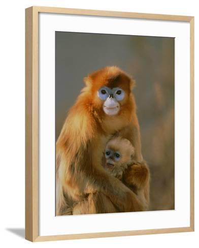 Sichuan Golden Monkey and Baby-DLILLC-Framed Art Print