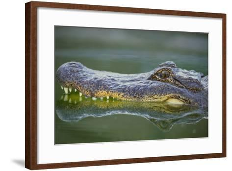 Alligator-DLILLC-Framed Art Print