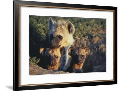Young Hyenas in Den-DLILLC-Framed Art Print