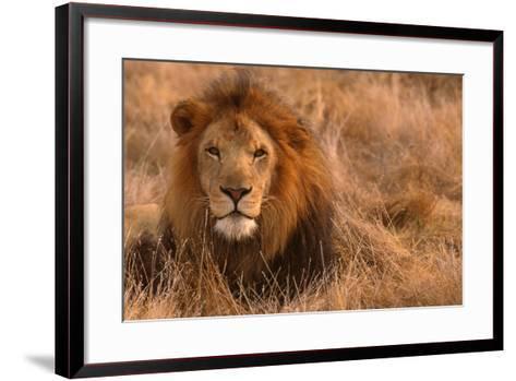 Lion-DLILLC-Framed Art Print