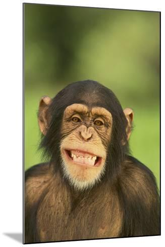 Chimpanzee-DLILLC-Mounted Photographic Print