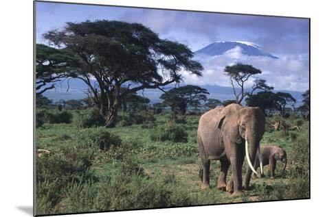 Elephant and Calf in Amboseli National Park-DLILLC-Mounted Photographic Print