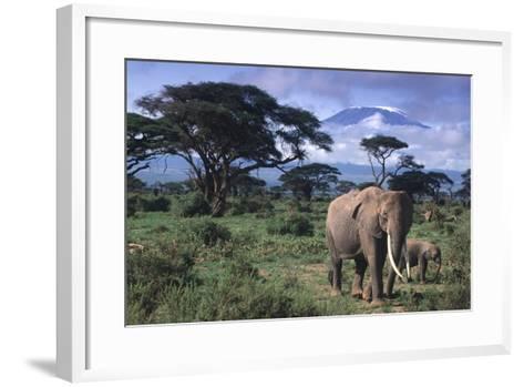 Elephant and Calf in Amboseli National Park-DLILLC-Framed Art Print