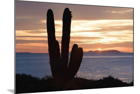 Sunset off Baja Coast-DLILLC-Mounted Photographic Print