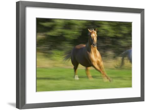 Quarter Horse Galloping-DLILLC-Framed Art Print