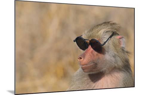 Baboon in Sunglasses-DLILLC-Mounted Photographic Print