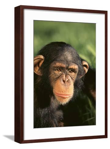 Chimpanzee-DLILLC-Framed Art Print