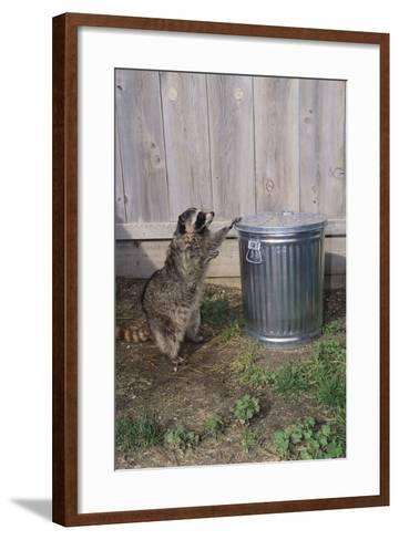 Mischievous Raccoon-DLILLC-Framed Art Print