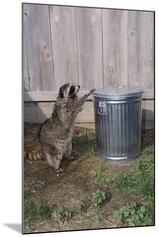 Mischievous Raccoon-DLILLC-Mounted Photographic Print
