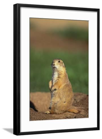 Alert Prairie Dog-DLILLC-Framed Art Print