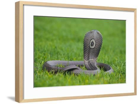 Cobra-DLILLC-Framed Art Print