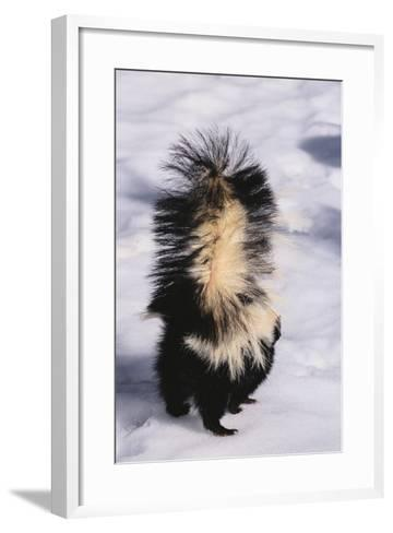 Striped Skunk in the Snow-DLILLC-Framed Art Print