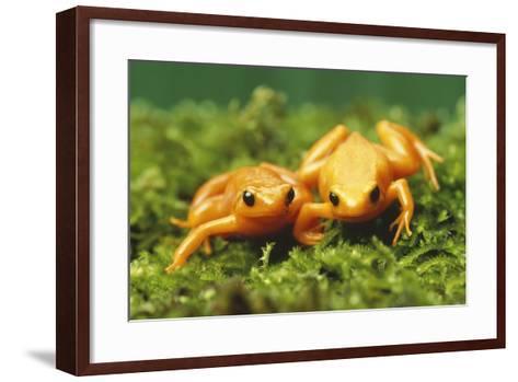 Golden Frogs-DLILLC-Framed Art Print