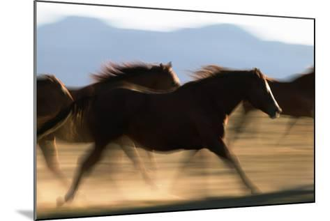 Galloping Horses-DLILLC-Mounted Photographic Print