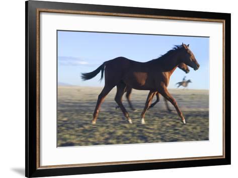 Horses Being Rounded Up-DLILLC-Framed Art Print