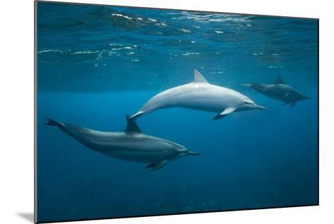 Spinner Dolphins-DLILLC-Mounted Photographic Print