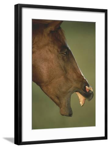 Horse Neighing-DLILLC-Framed Art Print
