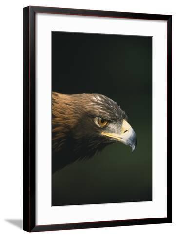 Golden Eagle-DLILLC-Framed Art Print