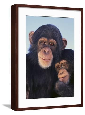 Chimpanzees-DLILLC-Framed Art Print