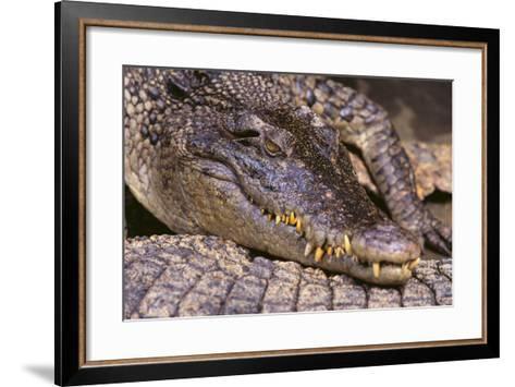 Crocodile-DLILLC-Framed Art Print