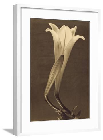 No. 1 by Tina Modotti--Framed Art Print
