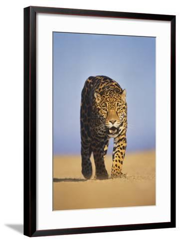 Jaguar-DLILLC-Framed Art Print